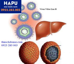 cau tao virus HBV 300x257 Những điều bạn cần biết về xét nghiệm định lượng virus HBV