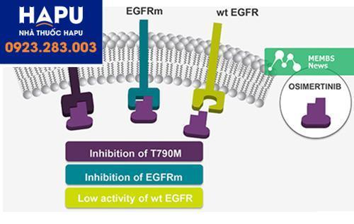 Cơ chế hoạt động của osimertinb